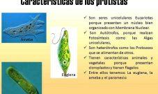 ¿Cuáles son las características de los protistas?