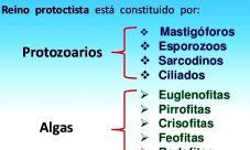 Clasificación de los organismos del reino protista