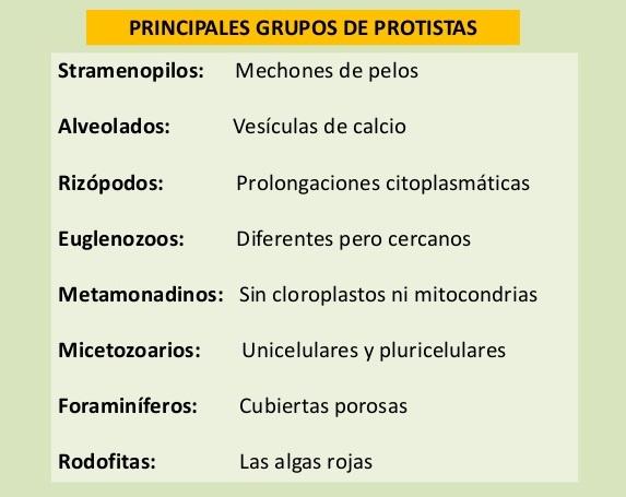 Grupos principales del reino protista