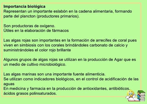 ¿Cuál es la importancia biológica del reino protista?